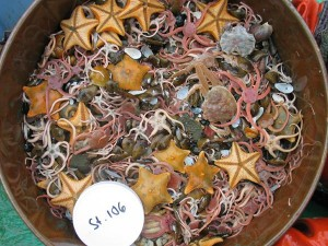 That's not sushi: a collection of benthic invertebrates from the Chukchi Sea floor. (Photo: NOAA)
