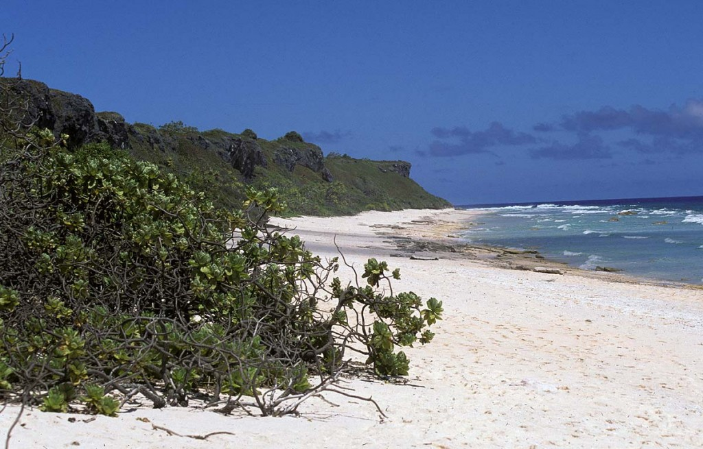 Henderson Island in the South Pacific, where survivors of the whaleship Essex disaster washed up in December 1820 (rats not pictured). Photo: public domain.